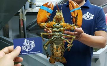 Danh sách các hải sản sống nhập khẩu